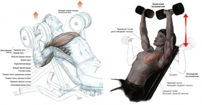 Спорт как подобрать вес отягощения, чтобы прогрессировать и не травмироваться