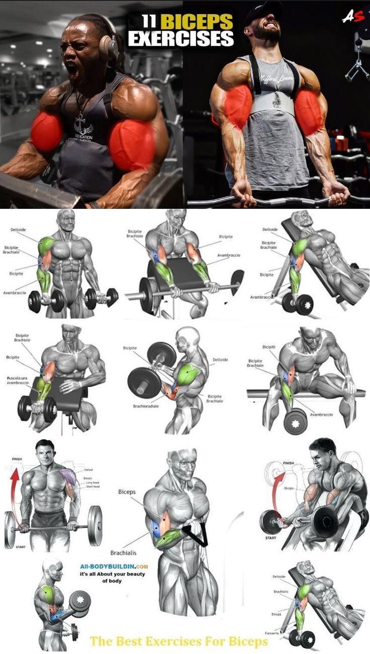 Топ лучших упражнений на бицепс в тренажерном зале