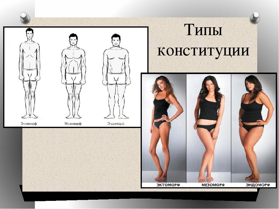 Типы телосложения: эктоморф, эндоморф и мезоморф | соматотипы