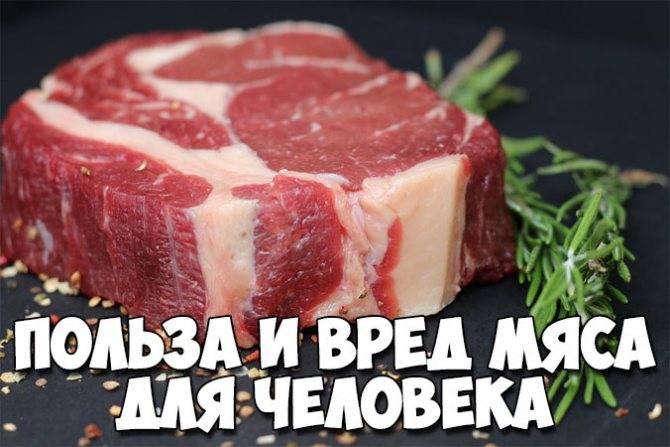 Польза и вред мяса для здоровья человека | польза и вред