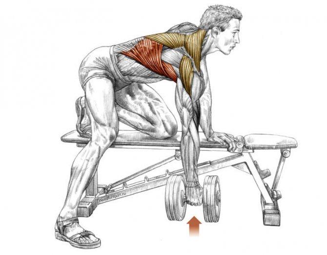 Топ лучших и эффективных упражнений для спины с гантелями
