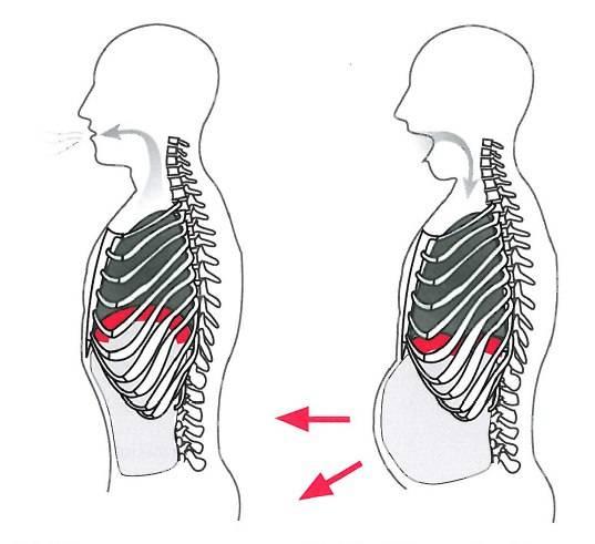 Диафрагмальное дыхание: его польза, техника и упражнения. дыхательная гимнастика от всех болезней!