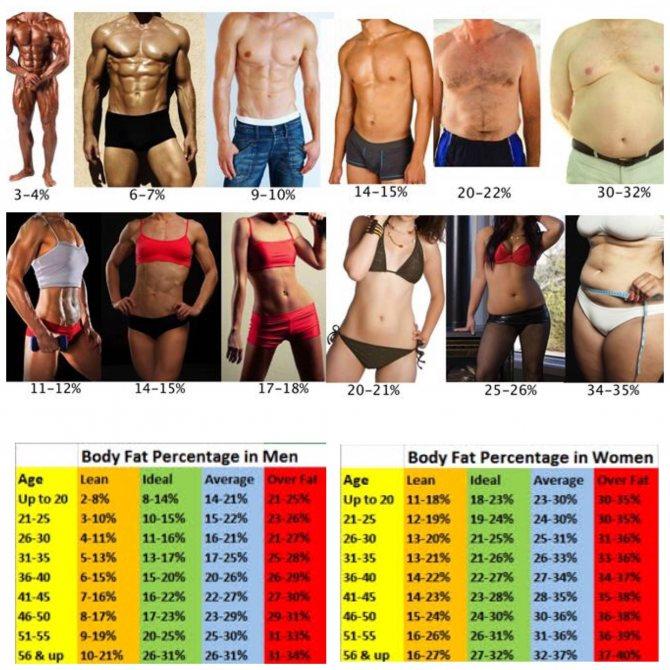 Что может рассказать о состоянии здоровья процент жира в организме?