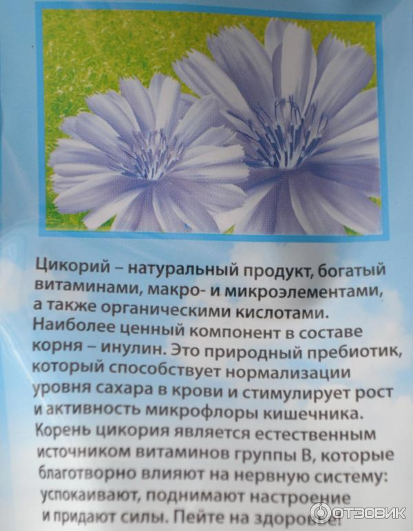Растворимый цикорий: польза и вред для организма и здоровья женщин, мужчин   блог о красоте и здоровье
