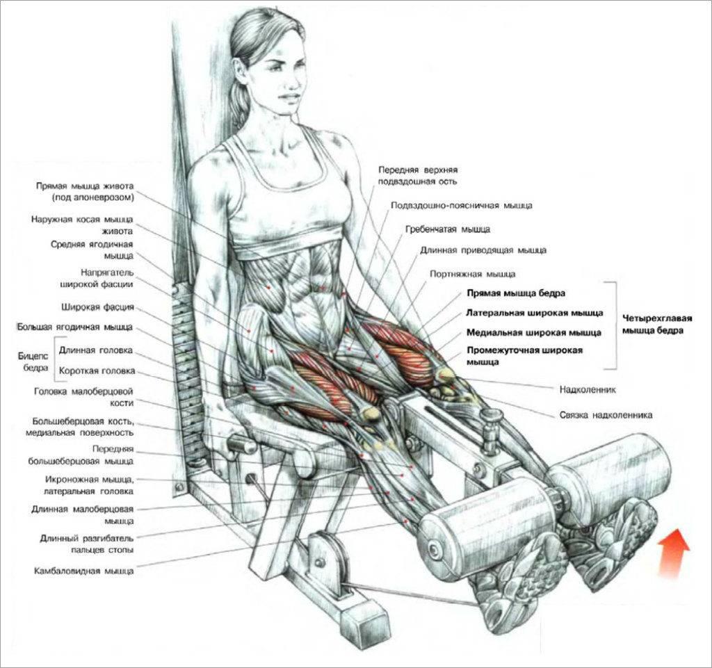 Сведение и разведение ног в тренажере сидя: техника выполнения и чем заменить?