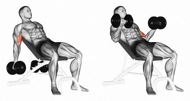 Топ-12 упражнений на бицепс с гантелями и штангой для спортзала и домашних условий