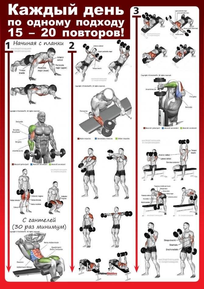 Программа тренировки в спортзале для мужчин: лучшие упражнения
