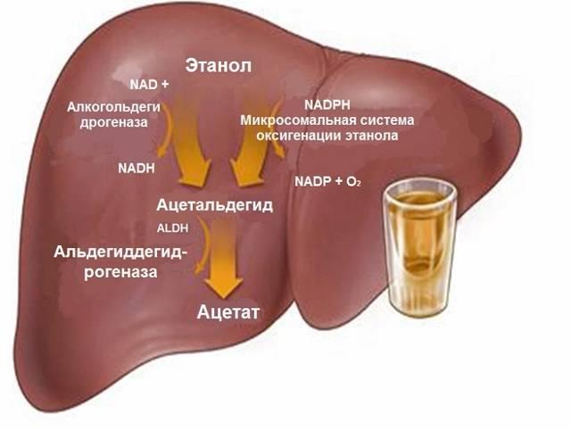 Поражения внутренних органов алкоголика