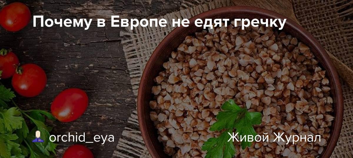 Почему европейцы не едят гречку, или какие любимые в россии продукты кажутся странными иностранцам