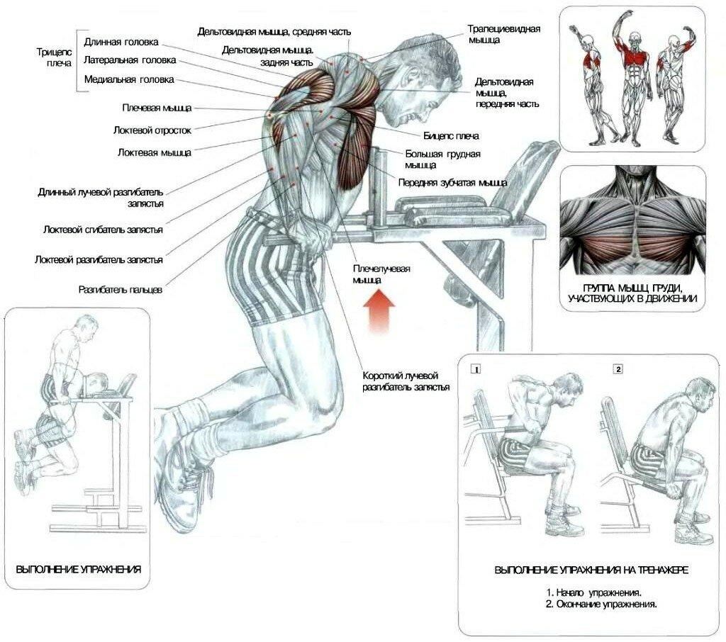 Подтягивания в гравитроне (широким, узким, обратным хватом) для девушек: какие мышцы работают, техника выполнения