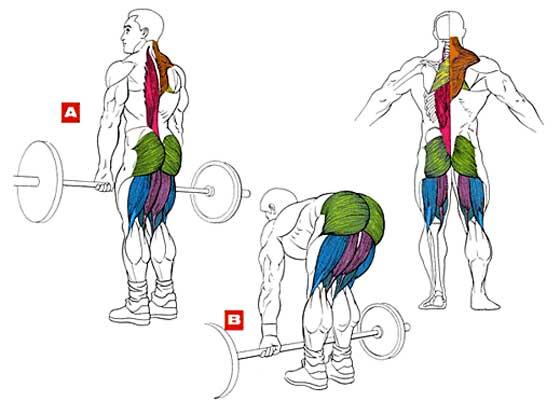 Мёртвая тяга со штангой: определение и отличие от становой тяги