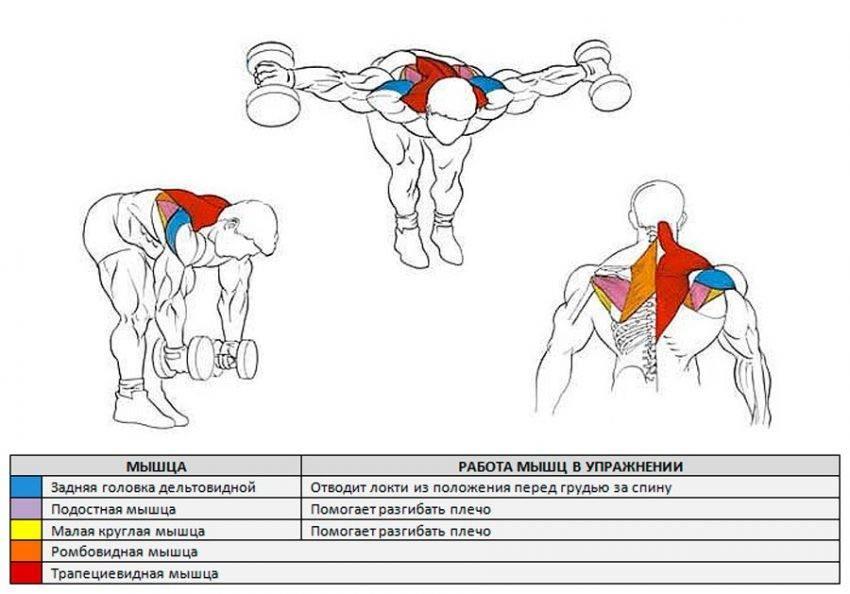 Упражнения на среднюю дельту: база и изоляция