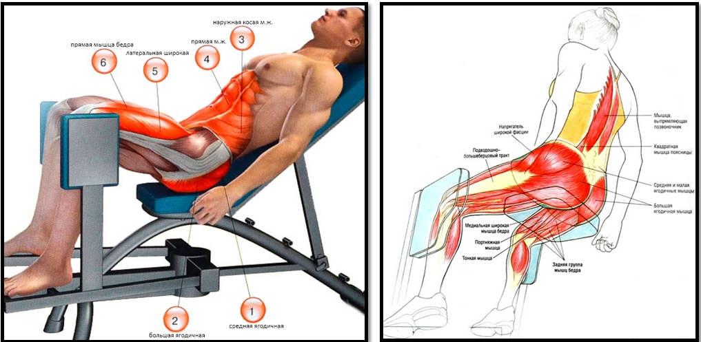 Жим ногами лежа в тренажере: какие мышцы работают, как правильно делать упражнение