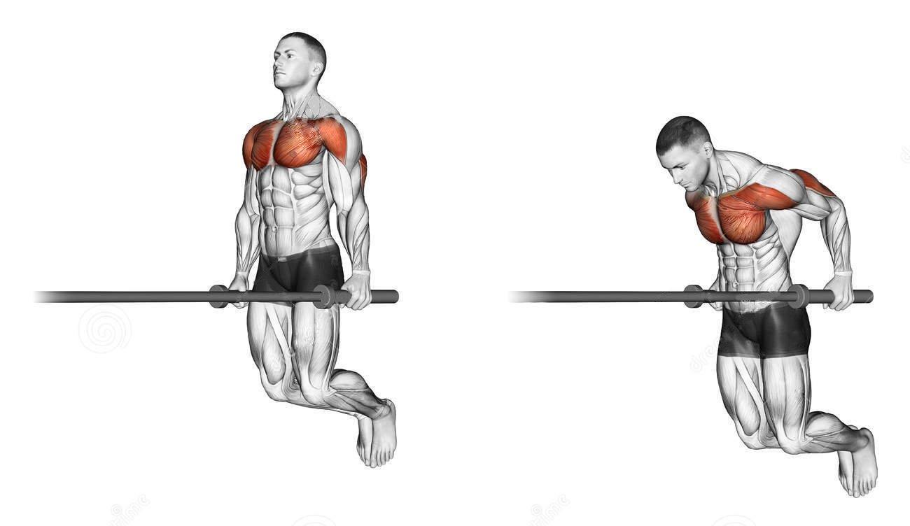 Тренировочные программы для занятий на брусьях. какие мышцы качаются при выполнении упражнений на брусьях