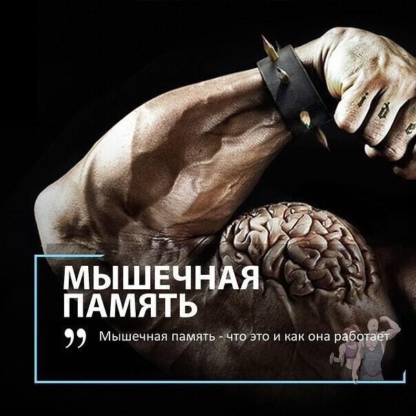 Мышечная память: ученые разгадали секрет быстрого восстановления физической формы