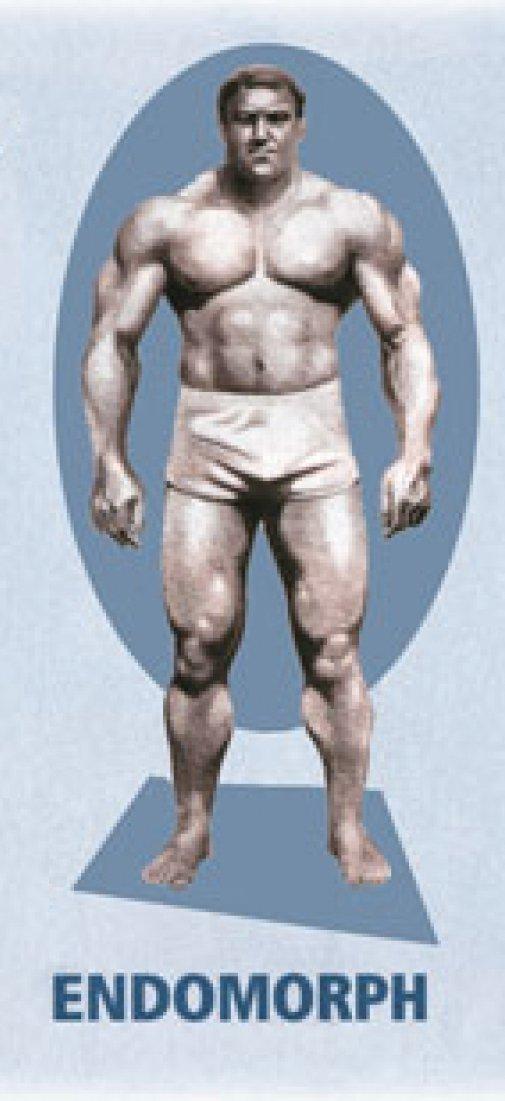 Программы тренировок для эндоморфа на похудение, рельеф и массу | rulebody.ru — правила тела