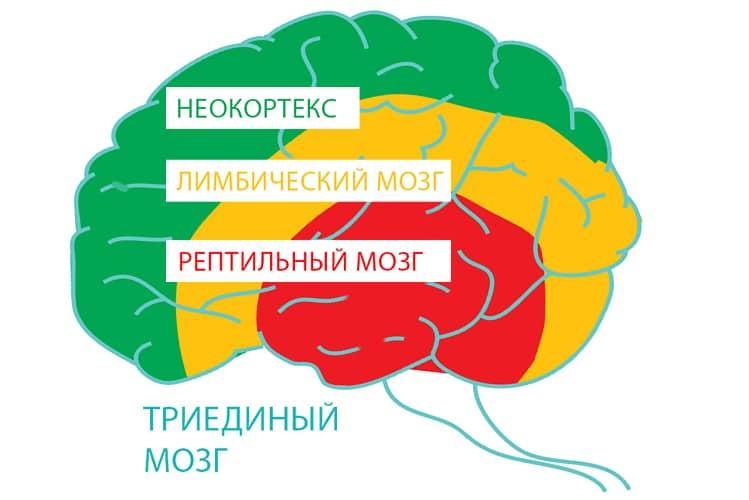 Сила воли и мотивация: этапы большого пути. психология успеха