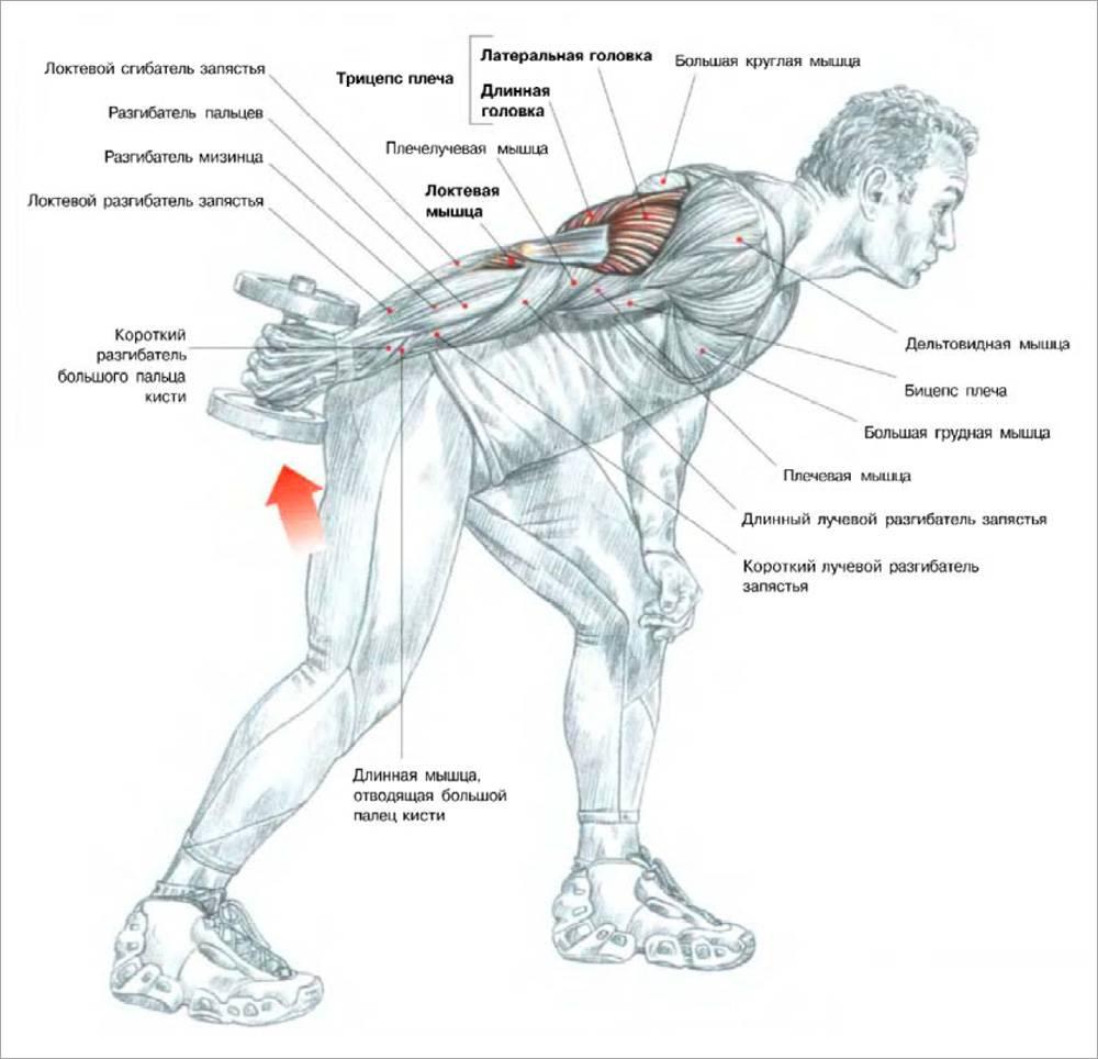 Как накачать руки мужчине в домашних условиях с гантелями: упражнения + планы