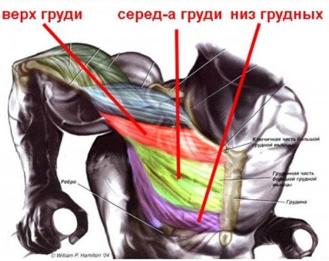 Упражнения на нижнюю часть грудных мышц: подчеркни свой грудак