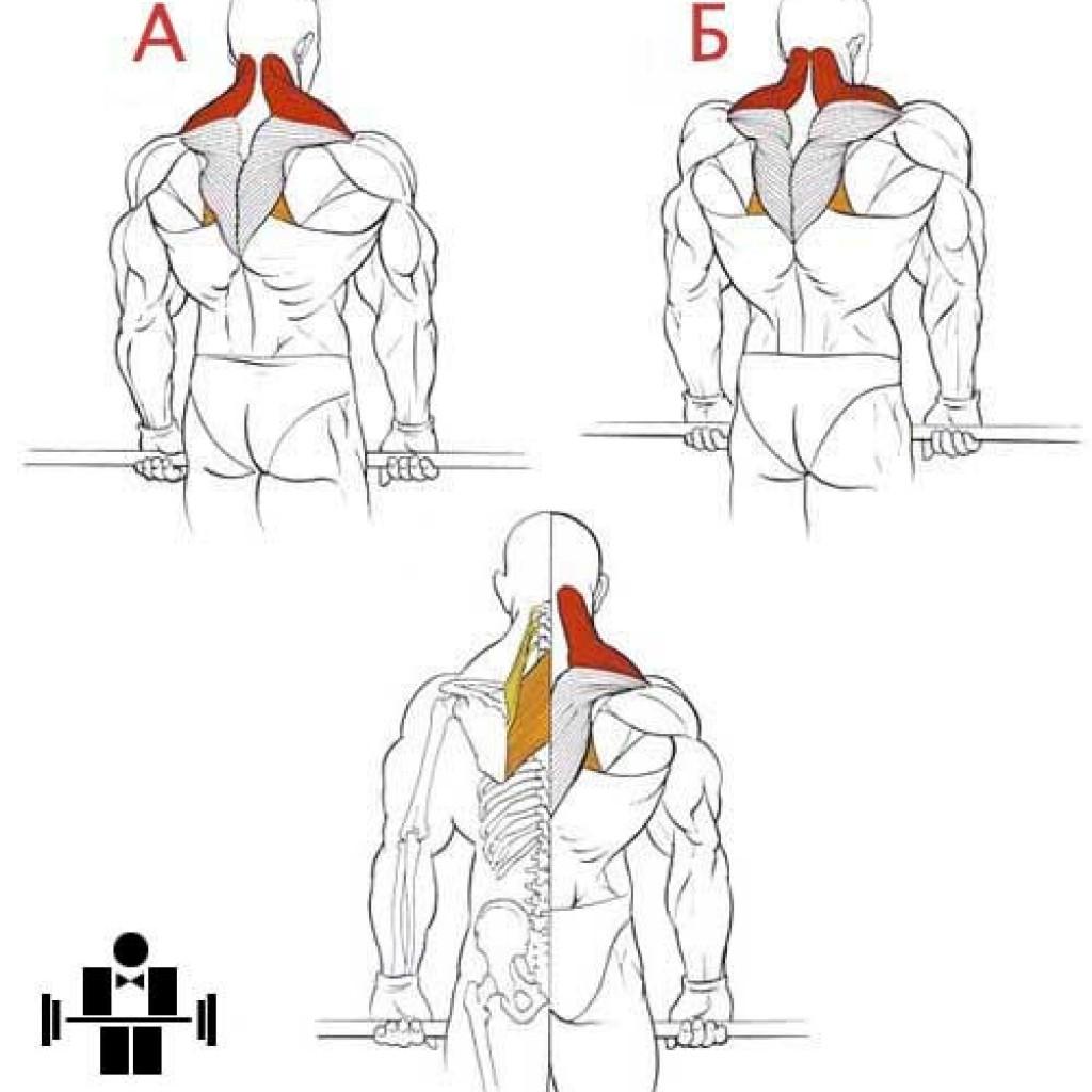 Как накачать шею- программа тренировок в тренажерном зале и дома