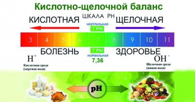 Какие продукты питания считаются щелочными: список, полная таблица