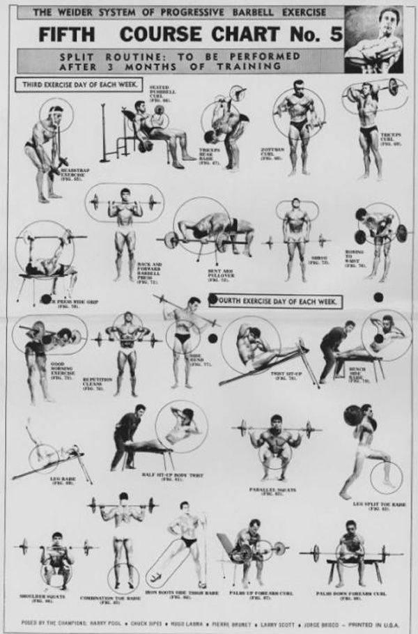 База до отказа: базовые упражнения в бодибилдинге