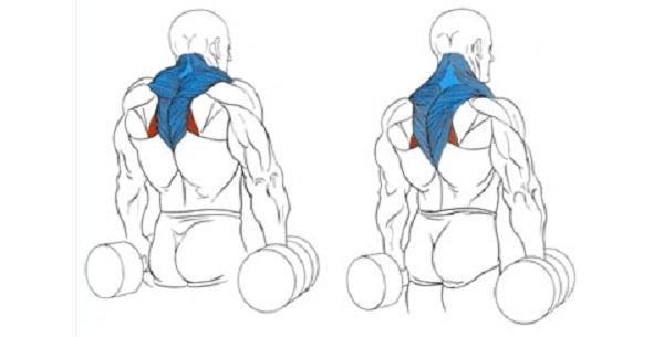 Как накачать трапецию с помощью 3 упражнений?