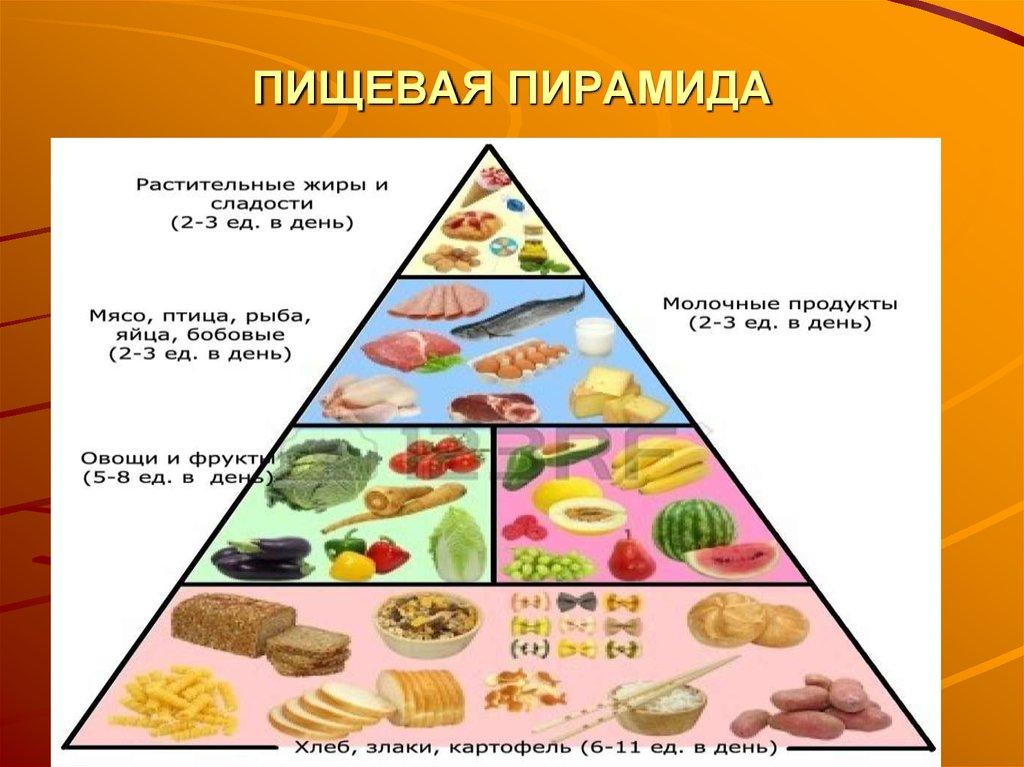 Пирамида правильного питания, как один из способов похудеть без вреда для здоровья