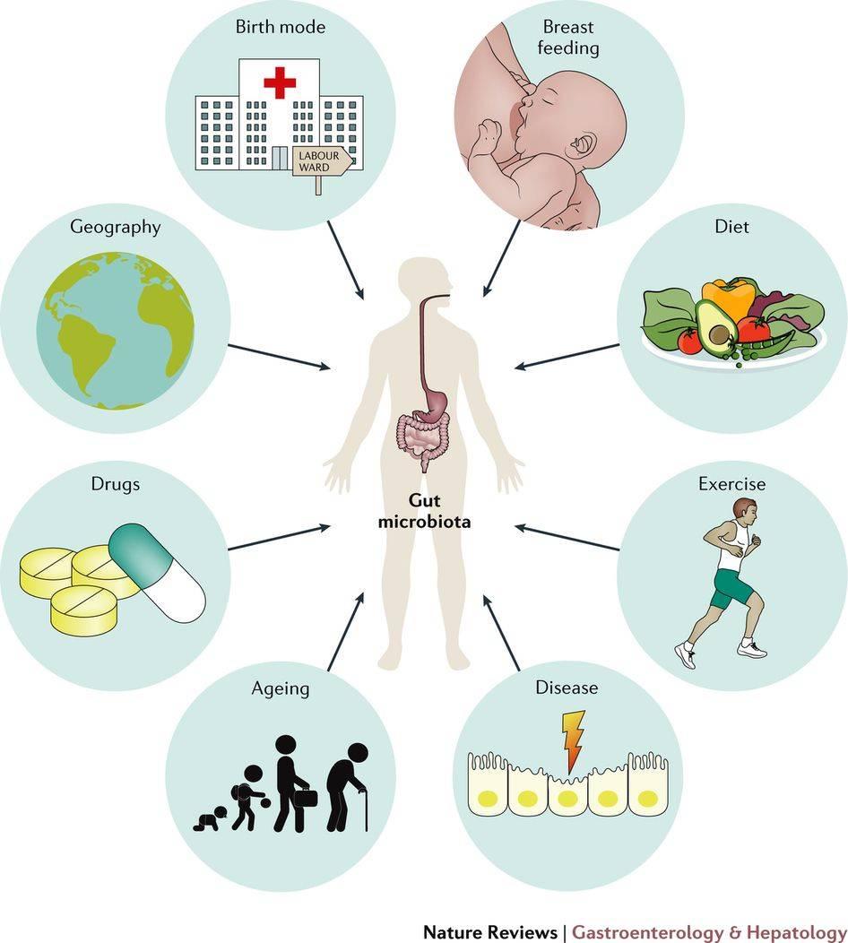 Что такое микробиом