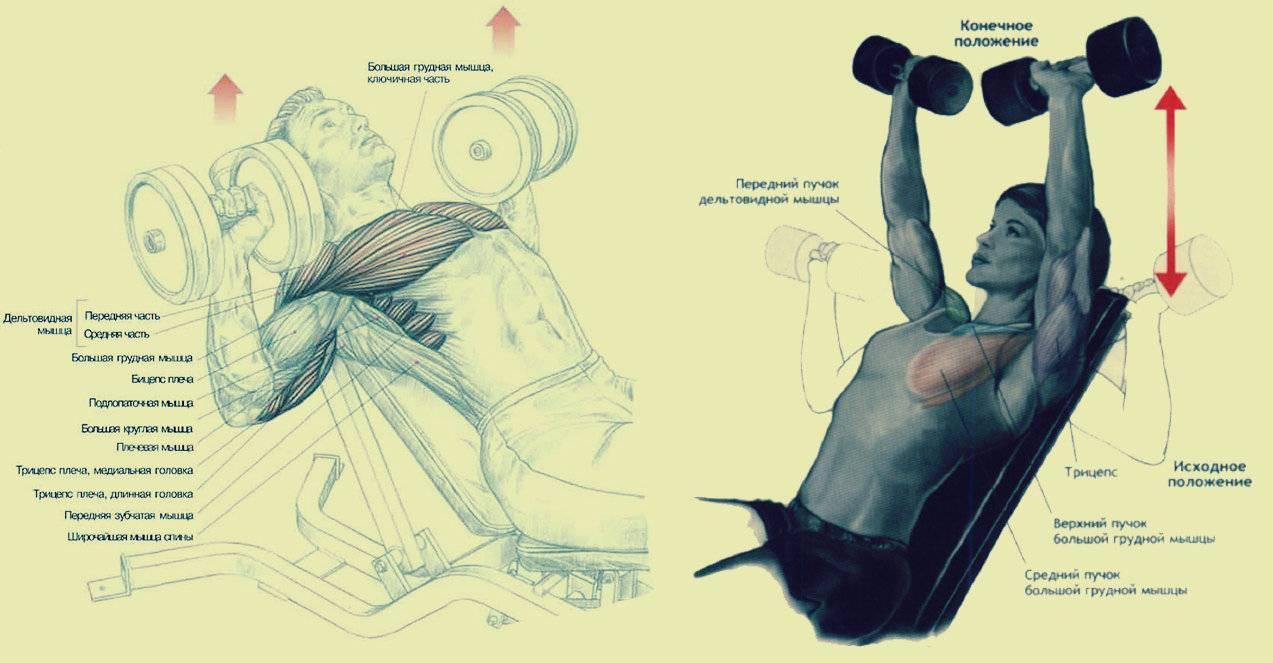 Как быстро накачать руки и грудь дома: комплексная тренировка