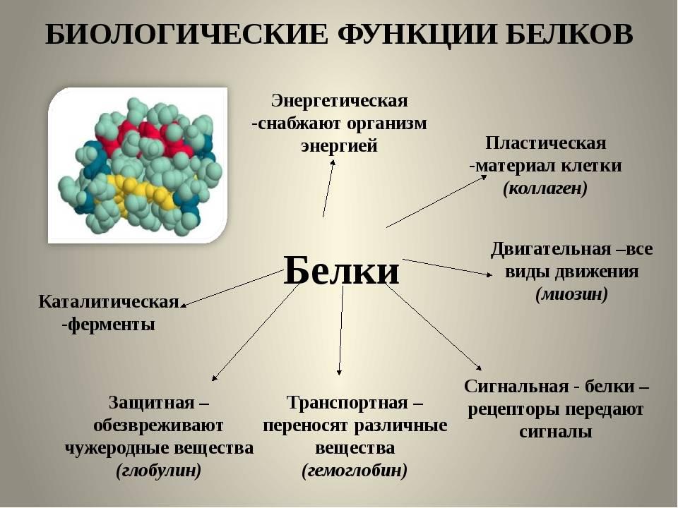Ликбез: вред и польза белка в вашем рационе