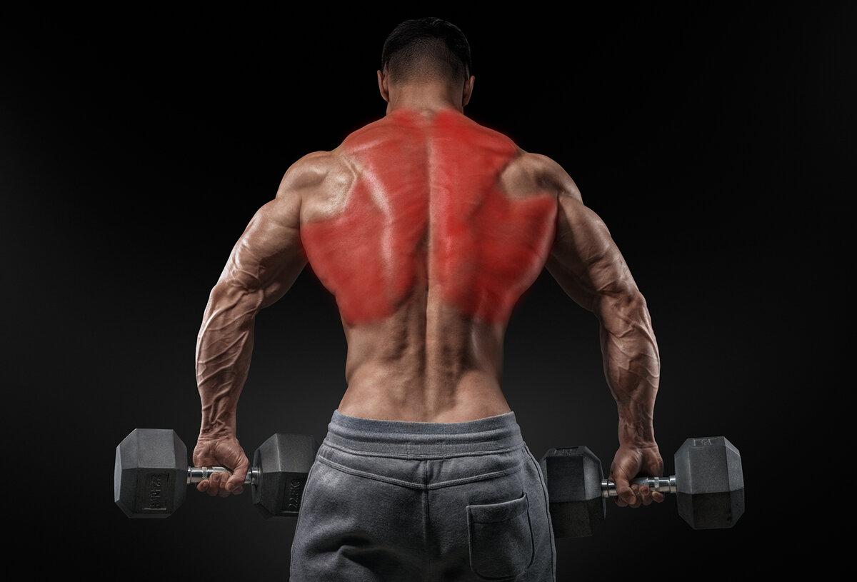 Лучшие упражнения на широчайшие мышцы спины для мужчин и женщин