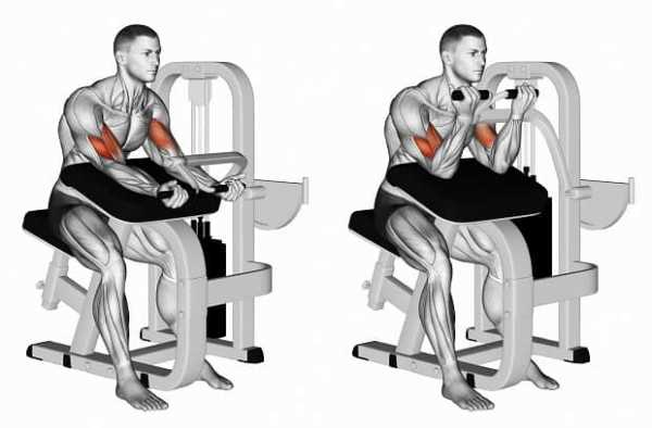 Упражнения для тренировки бицепсов