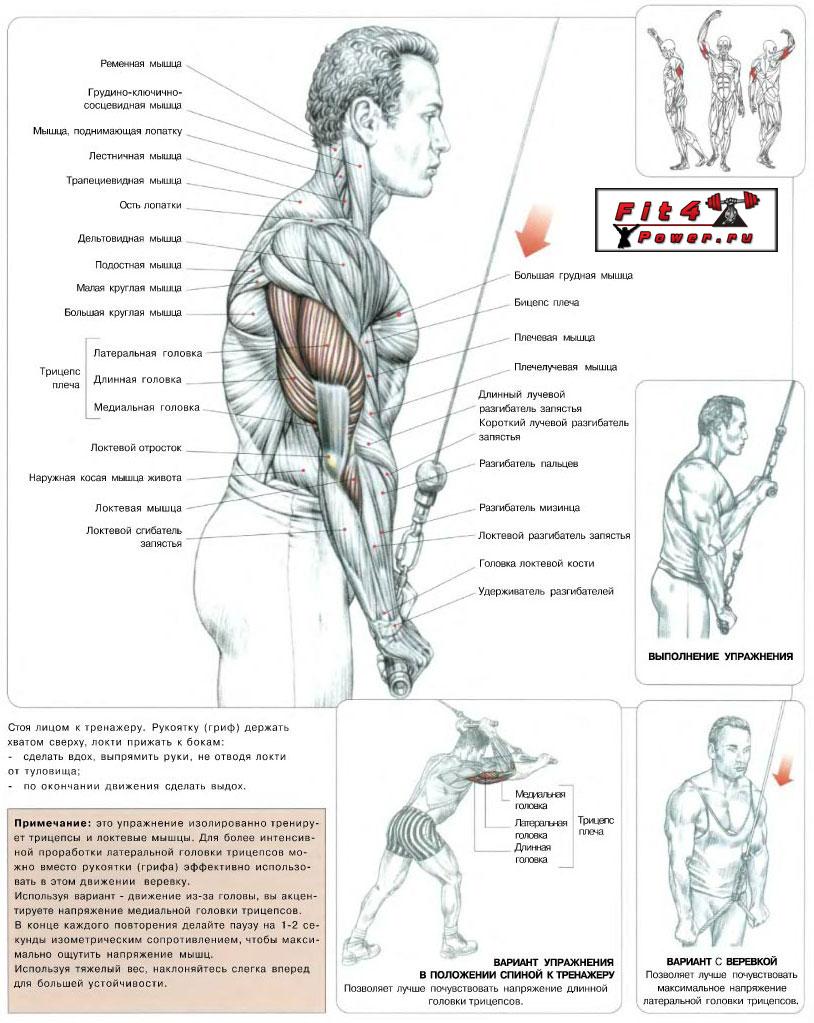 Разгибание рук в верхнем блоке: какие мышцы работают, правила, ошибки, противопоказания