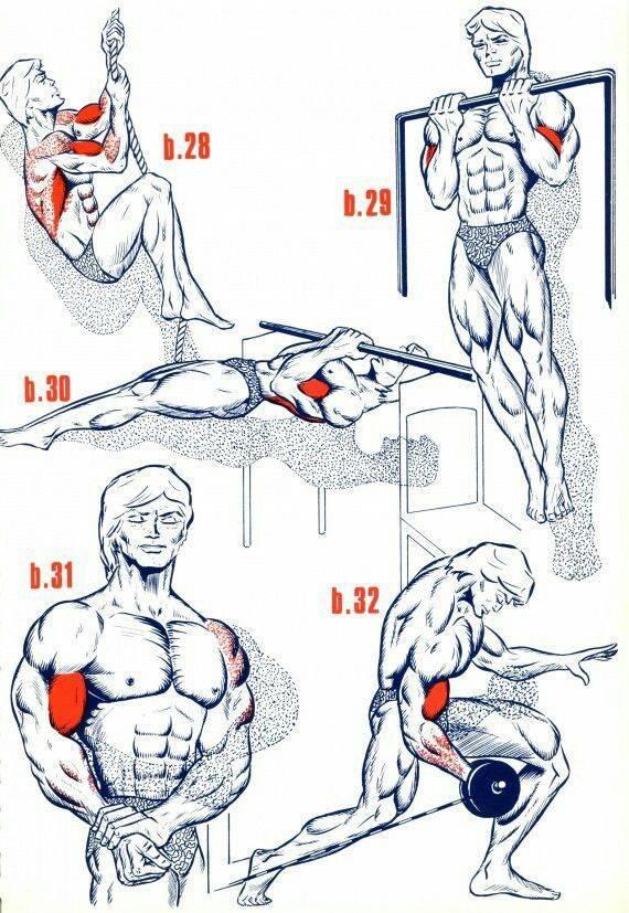 Упражнения на бицепс в тренажёрном зале