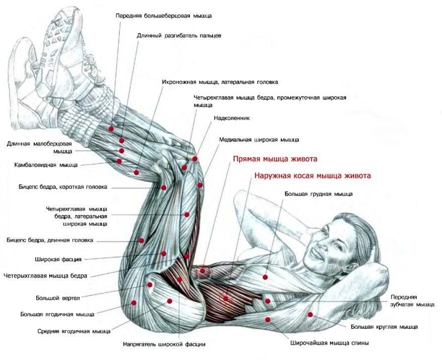 Прокачиваем труднодоступные мышцы пресса — упражнение «ножницы». правила выполнения упражнения «ножницы»