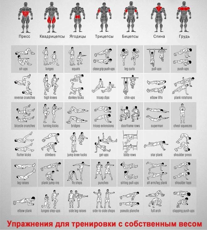 Эффективные упражнения для похудения рук в домашних условиях и в зале