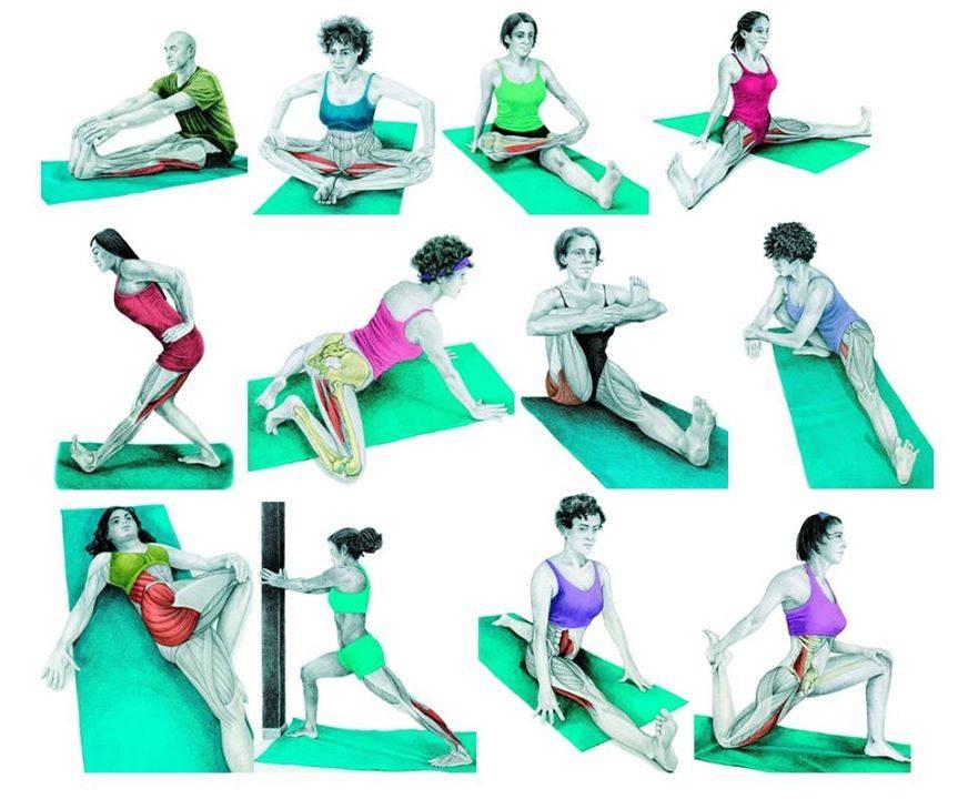 Самые эффективные упражнения для растяжки ног   rulebody.ru — правила тела