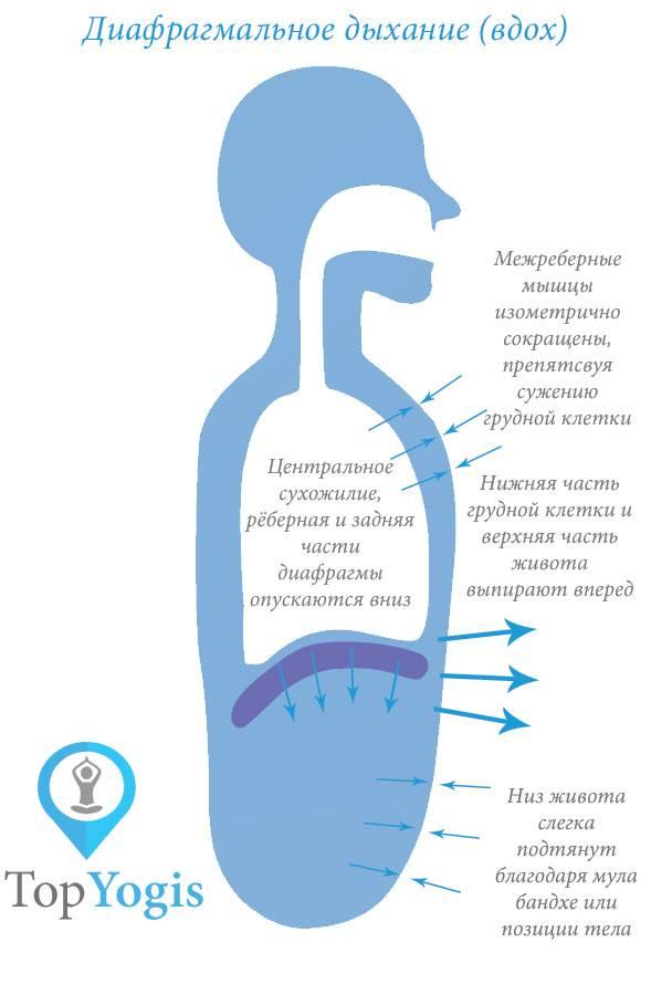 Как дышать диафрагмой: правильное дыхание, техника выполнения, оздоровление и отзывы