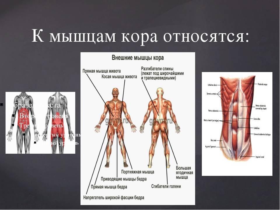 5 лучших статических упражнений для развития мышц кора