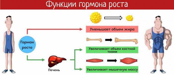11 способов повысить гормон роста человека (hgh) естественным путем