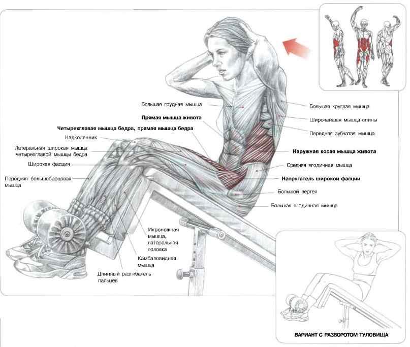Скручивания на наклонной скамье: описание упражнения с фото, пошаговая инструкция выполнения и проработка мышц живота