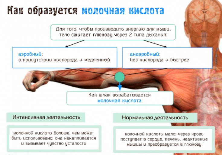 Что такое катаболизм? — sportfito — сайт о спорте и здоровом образе жизни