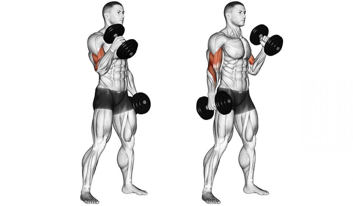 Упражнения на бицепс в тренажерном зале, базовые и изолирующие