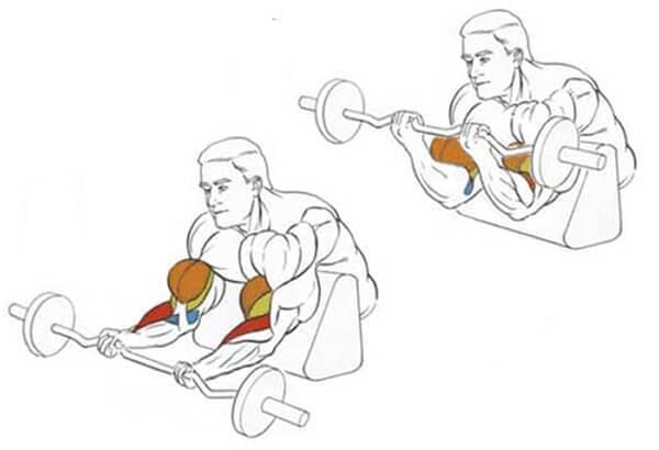 Сгибание рук на скамье скотта: техника подъем штанги и гантелей на бицепс на лавке скотта