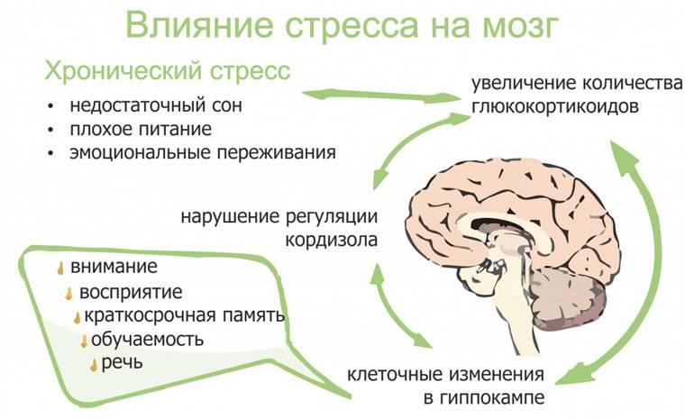 Как тренировать мозг, чтобы не поддаваться стрессу?