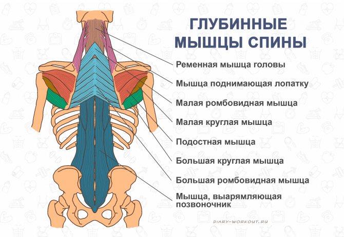 Укрепление мышц разгибателей спины