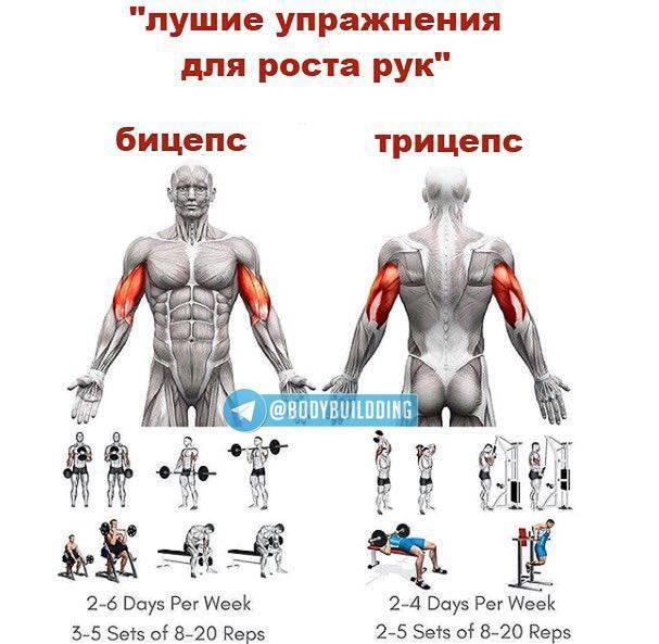 Упражнения на бицепс: в тренажерном зале и дома