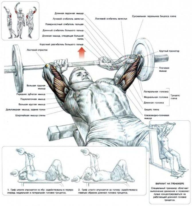 """Упражнение """"гильотина"""": на какие мышцы действует, техника выполнения, отзывы"""