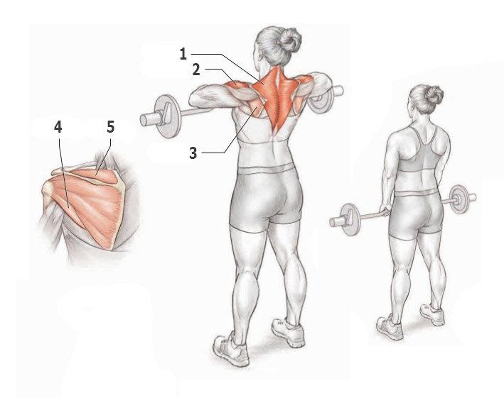 Упражнения для проработки трапеций